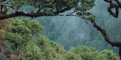 Sapadores florestais