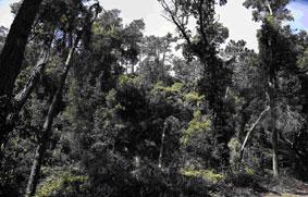"""Proprietários florestais consideram que reforma de 2017 foi para """"português ver"""