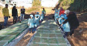 Município de Pedrógão Grande sensibiliza crianças do concelho em ação de educação ambiental e reflorestação