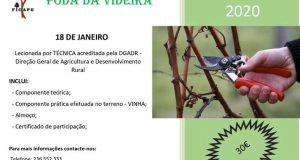 Figueiró dos Vinhos – FICAPE promove curso de poda da videira