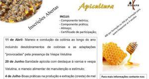 Figueiró dos Vinhos: FICAPE realiza formação em apicultura