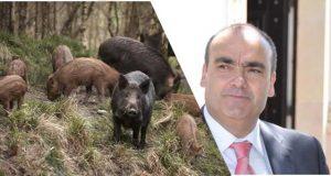 Figueiró dos Vinhos: Javalis preocupam PSD. Destroem culturas e causam prejuízos