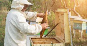 Apicultores da Serra da Lousã registam quebras de 80% na colheita de mel