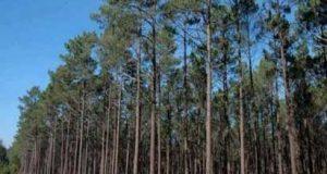 """Figueiró dos Vinhos: (Baldios) """"Perímetros Florestais da Freguesia de Campelo"""""""